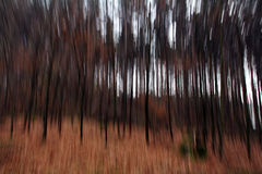 A blurred forest in autumn Royalty Free Stock Photography