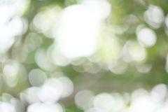 blurred forest background Royalty Free Stock Images