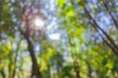Blurred nature beautiful bokeh stock images