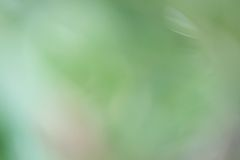 Blurred forest background Stock Photos