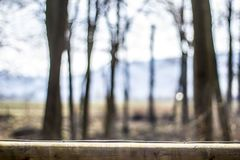 Blurred forest  expedition with fence in the front. A fence in the foreground and many blurred trees in the background Royalty Free Stock Images
