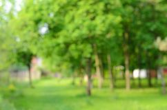 Blurred forest Royalty Free Stock Photos