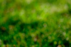 Blurred fresh green grass field in the early morning. Green leave with bokeh background in spring. Nature background. Clean. Environment. Green bokeh abstract stock photo