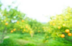 Blurred of fresh orange fruit farm garden Stock Photo