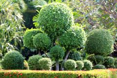 Blurred garden tree, blurred background image of bending bushes sphere tree green leaf spherical shrub garden. The blurred garden tree, blurred background image stock photos