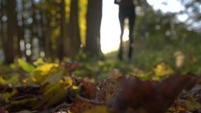 Blurred girl running on fallen leaves in sunny autumn forest. Blazing sun. Super slow motion background bokeh shot stock footage