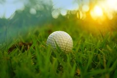 Golf ball is in rough in beautiful golf course at sunset background. Blurred golf ball is in rough in beautiful golf course at sunset background stock images