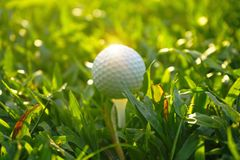 Golf ball on tee in beautiful golf course at sunset background. Blurred golf ball on tee in beautiful golf course at sunset background royalty free stock images