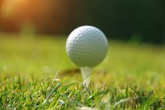 Blurred golf ball on tee in the evening golf course with sunshin. E in thailand Stock Images