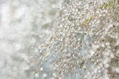 Blurred grass background with dew drops Royalty Free Stock Image