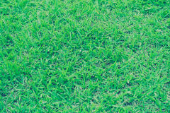 Blurred of grass Royalty Free Stock Photo