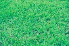 Blurred of grass Stock Images