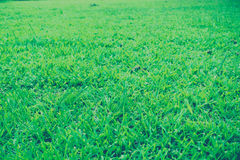 Blurred of grass Royalty Free Stock Image
