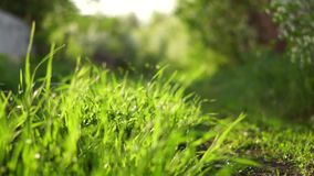 Blurred grass background stock video