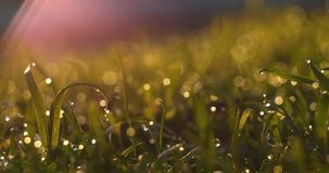 Blurred Grass Background With Water Drops stock footage