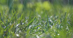 Blurred Grass Background With Water Drops. Green grass during heavy rain stock video footage