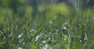 Blurred Grass Background With Water Drops. Green grass during heavy rain stock video