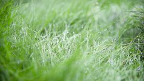 Blurred Grass Background With Water Drops. stock video footage