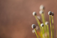 Blurred grass flower background Stock Photo