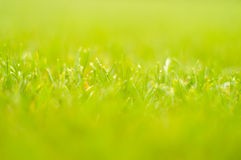 Blurred grass Royalty Free Stock Image