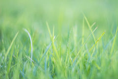 Blurred grass out of focus tropical green grass field abstract b Stock Images