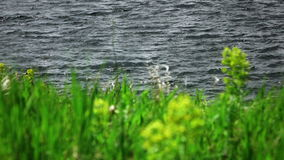 blurred grass sways in the wind with lake waves at background stock video