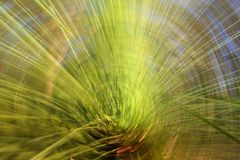 Blurred grass tree. Grass tree photographed with slow shutter speed to create twirl blur Royalty Free Stock Photo