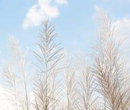 Blurred grayish grass flower on blue sky Stock Image