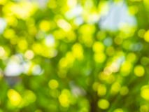 Blurred green background from leaves stock photo