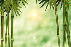 Blurred green background with palm trees as a framework Stock Photos