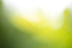 Blurred green background with sunlight Royalty Free Stock Photo
