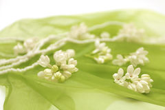 Blurred green background of white flowers Stock Images