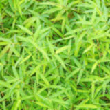 Blurred green bamboo leaf Royalty Free Stock Images