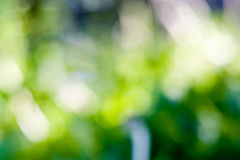 Blurred green bokeh Stock Photos