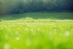 Blurred green field background Royalty Free Stock Photos