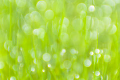 Blurred green grass background with bokeh Stock Image