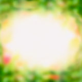 Blurred green nature background with sunshine Stock Photos