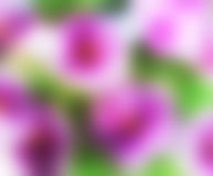Blurred, Green and purple flower background Royalty Free Stock Photo