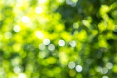 Blurred green tree leaf background with bokeh, Nature texture. Blurred green tree leafs at sun background with bokeh, summer nature texture stock photos