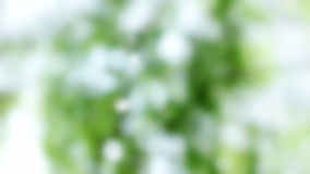 Blurred Green White Glistening Nature Background stock video