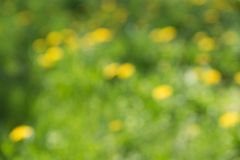 Blurred green and yellow nature background Stock Images