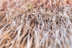 Blurred Hay. Dray Blurred Hay (selective focus Stock Photo