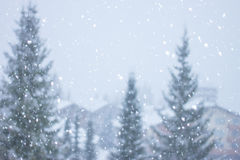 Blurred heavy  snow falling. Blurred heavy snow falling on background of fir-trees Stock Images