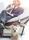 Blurred image of a businessman sitting in a chair and his little pet stock image
