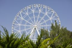Blurred image of the ferris wheel In the foreground, a sharp image of conifers stock image