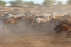 Blurred image without focus herd of horses. Stock Photos