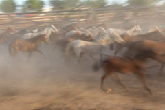 Blurred image of a herd horses in motion. Stock Photo