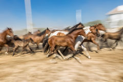 Blurred image of a horse in motion. Royalty Free Stock Images