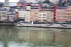 Blurred image of seagull flying Royalty Free Stock Images