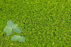 Blurred lamna on the surface. Is a green background Royalty Free Stock Image